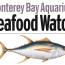 Announcing Our Partnership with the Monterey Bay Seafood Watch Program